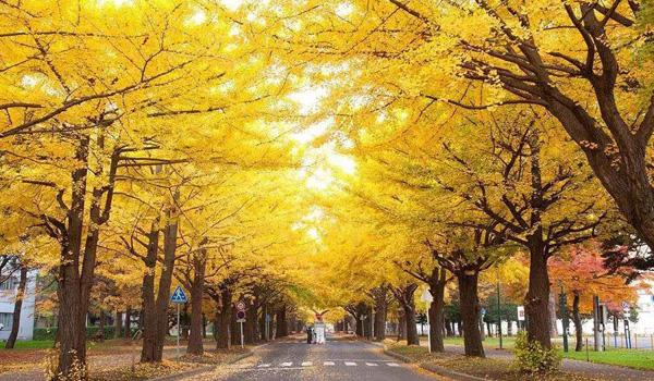 上海交通大学日本修士预备课程